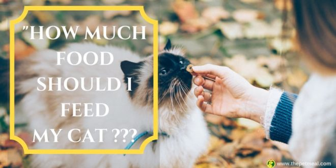 How Much Food Should I Feed My Cat