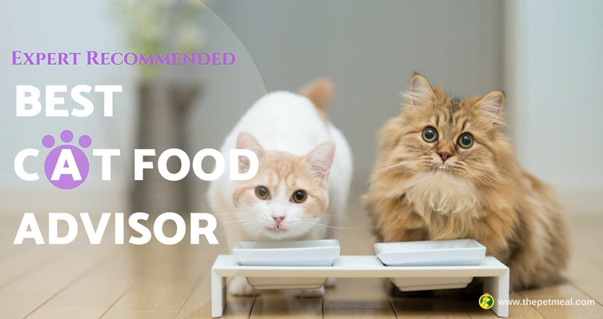 Cat Food Advisor