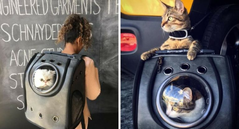 Texsens Airline Approved Cat Carriers Travel Backpack